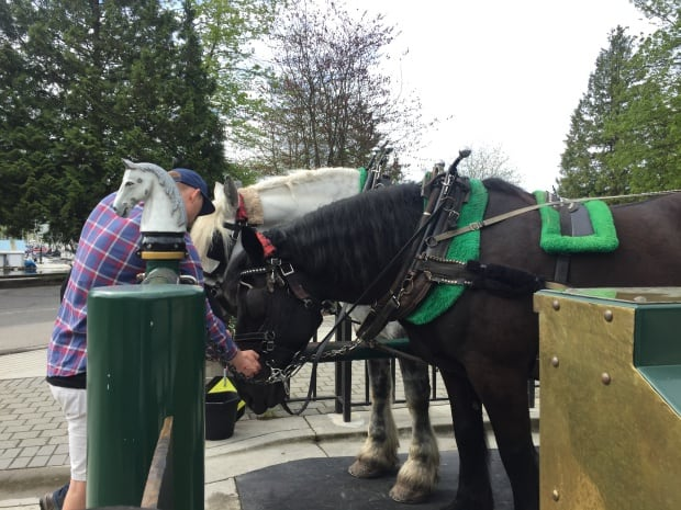 Fun things to do in Vancouver - Stanley Park Horse Drawn Carriage Tour