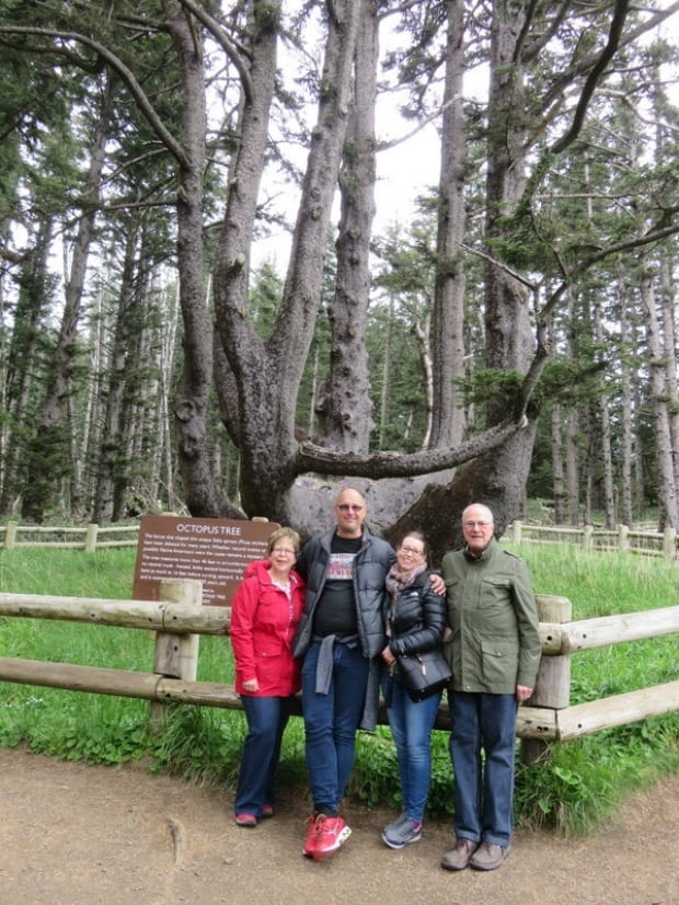 Lincoln City, Oregon - Octopus Tree at Cape Meares Lighthouse,