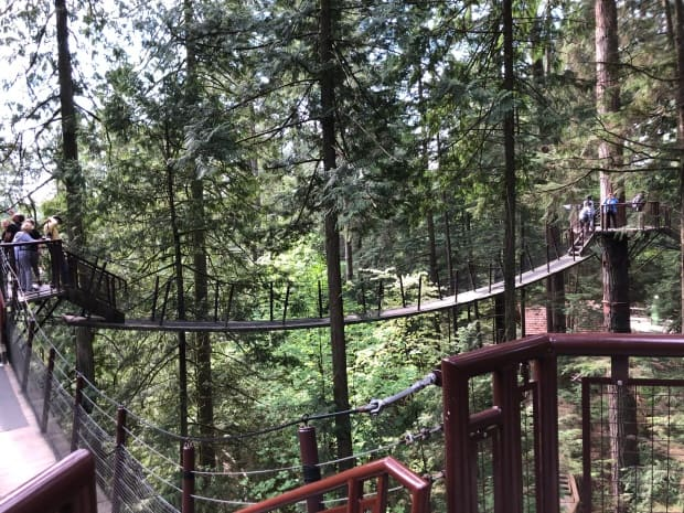 Fun things to do in Vancouver - Tree Tops Walk